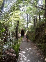 Walkway in Mair Park, Whangarei