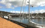 Whangarei Bridge Market