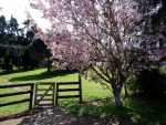 Cherry Blosson Tree and Farm