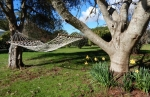 Daffodils and hammock in the orchard at Lupton Lodge
