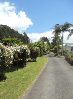 Tree lined entrance to Lupton Lodge, Whangarei