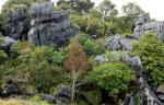 limestone-at-waro