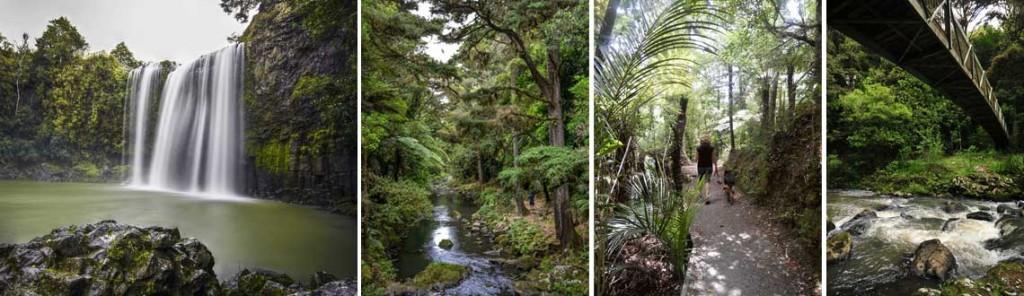 Whangarei-Falls-Walkway
