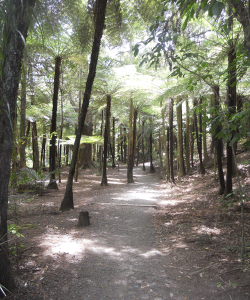 Whangarei Bush Walk