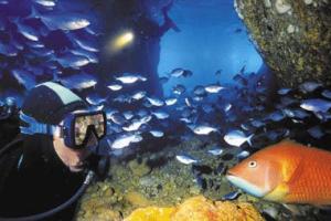 Poor Knights Islands Scuba Diving Trips