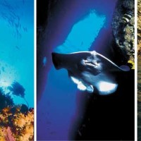 Poor Knights Islands Diving & Cruises