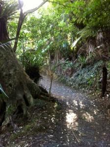 Whale Bay Walkway Bush Track