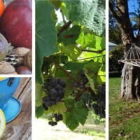 Country Garden Accommodation in Whangarei