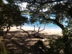 whale-bay-pohutukawa-view